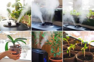 Top 10 Humidifier for plants Review