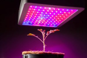 Top 10 Lights For Vegetative Growth Reviews