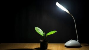 Best Led Grow Light for Growing Indoor Plants